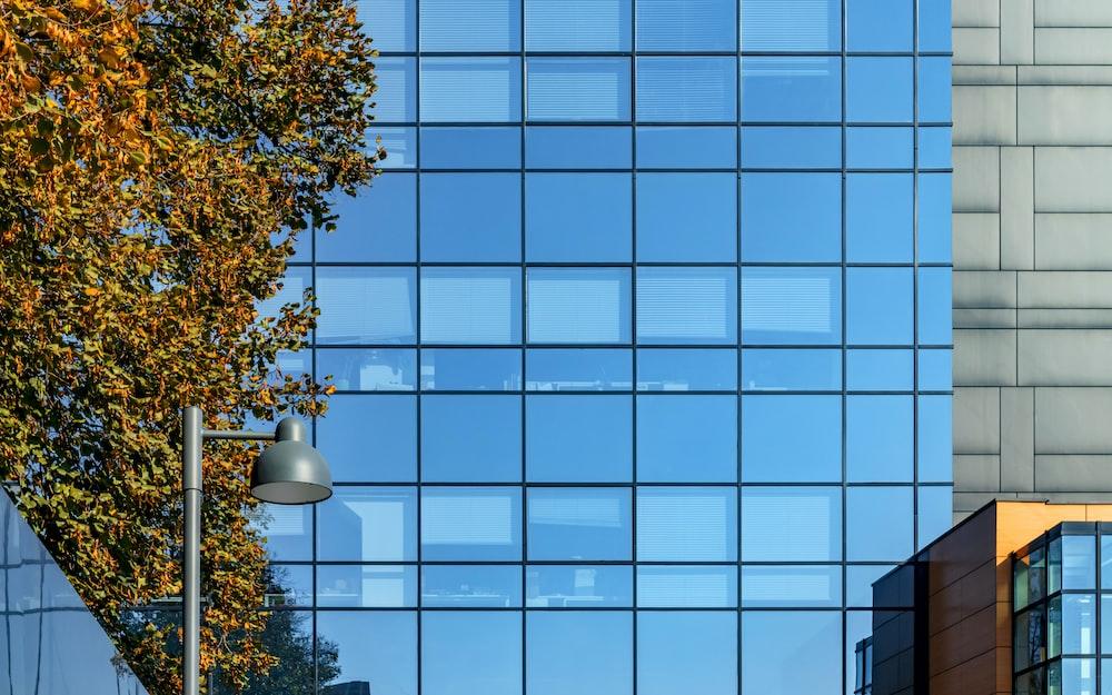 green tree beside glass building