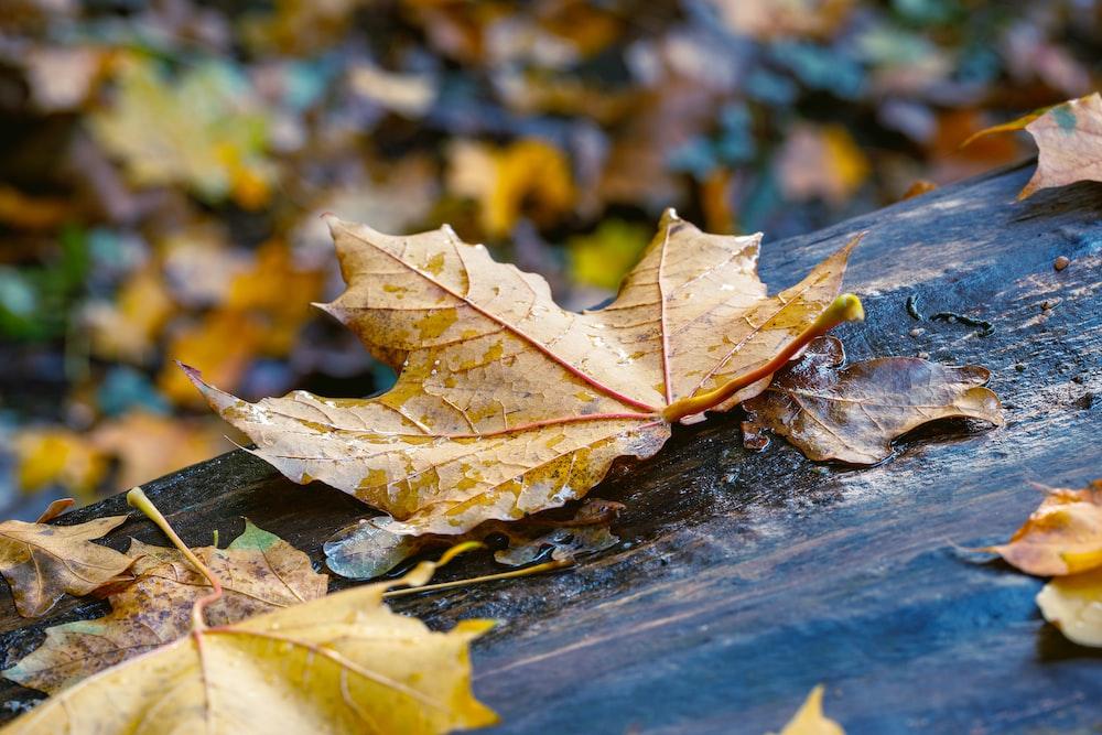 brown maple leaf on black wooden surface