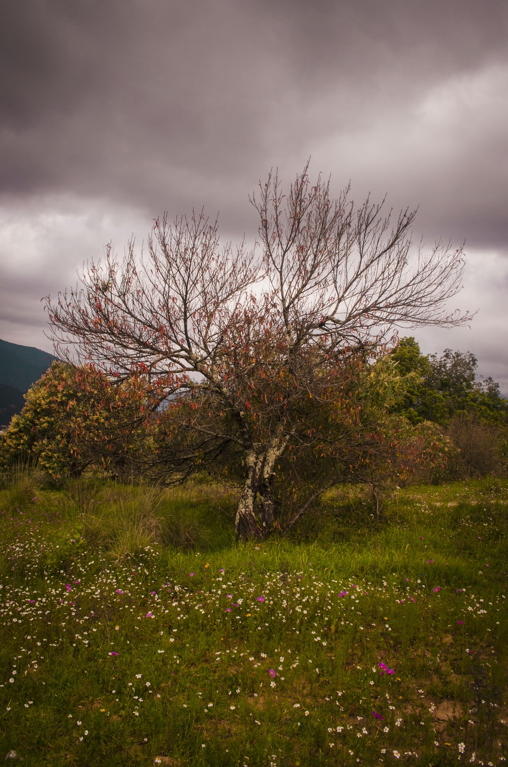 leafless tree on green grass field under gray cloudy sky