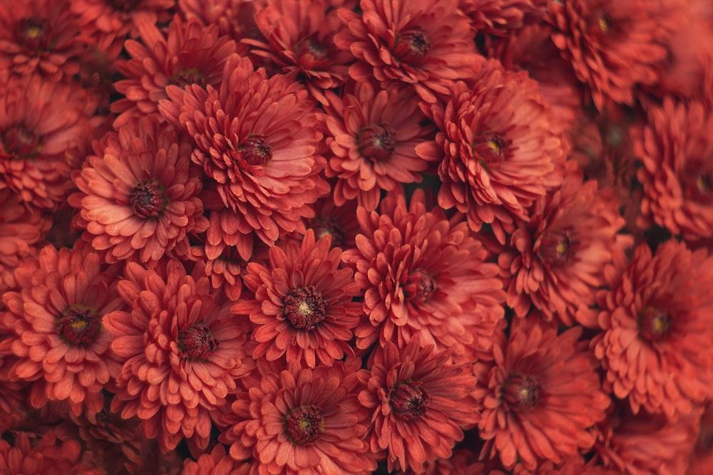 red flowers in macro lens