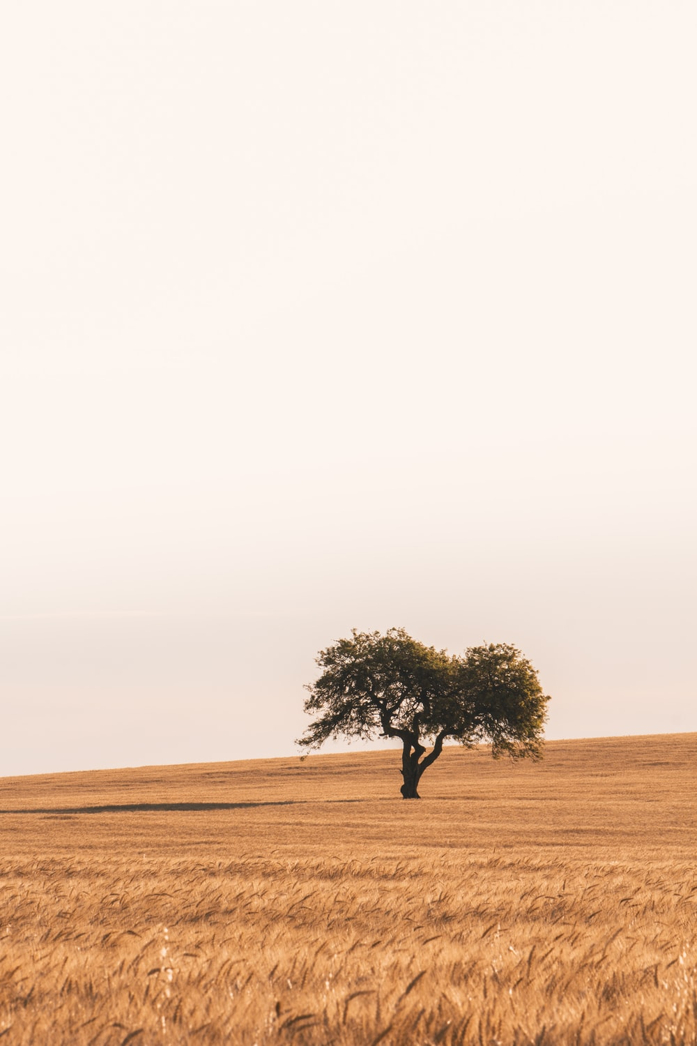 green tree in the middle of brown field