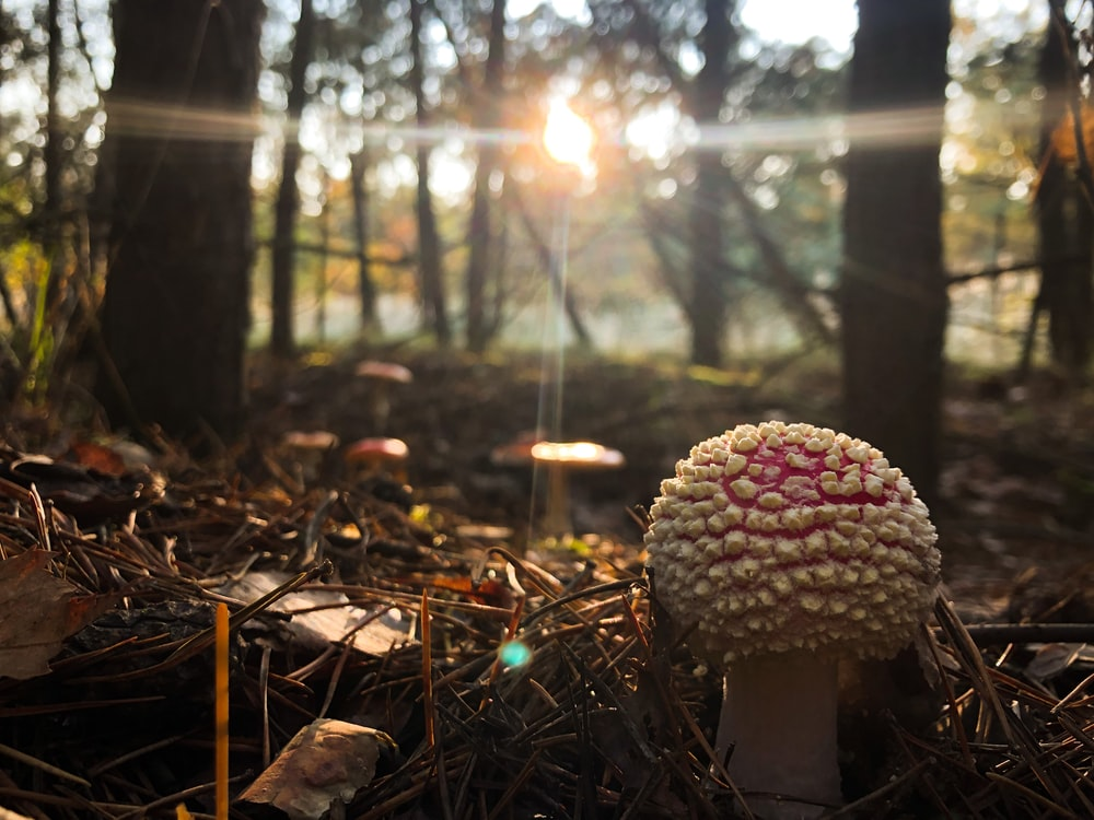 white and brown mushroom on forest during daytime