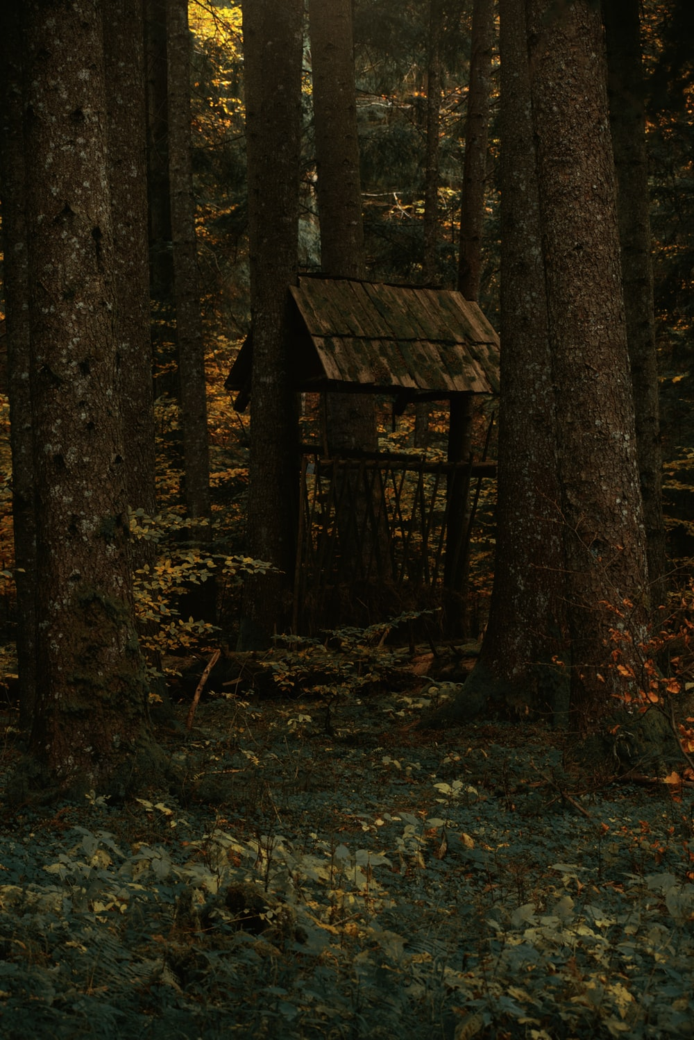 brown wooden house in the woods