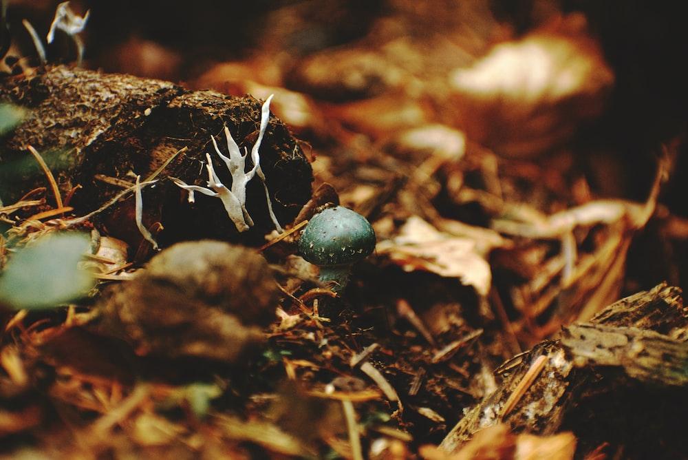 blue round fruit on brown soil