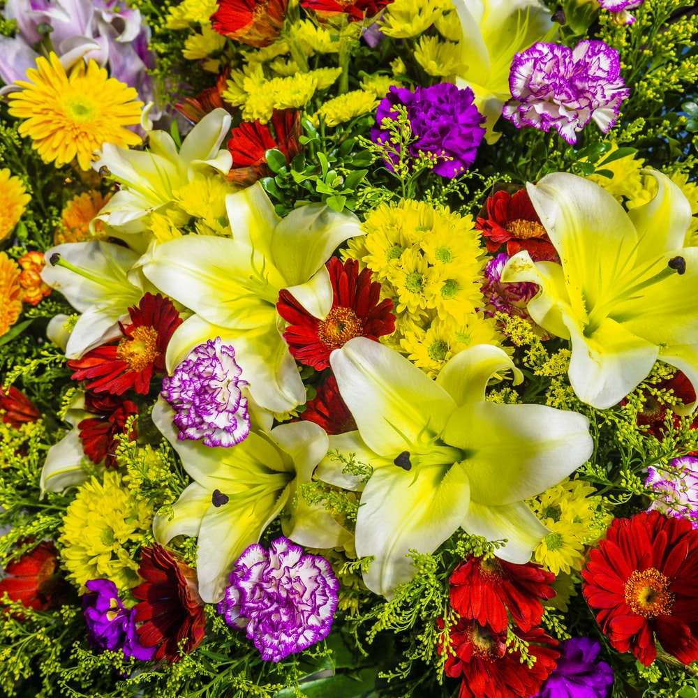 yellow and pink flowers with green leaves