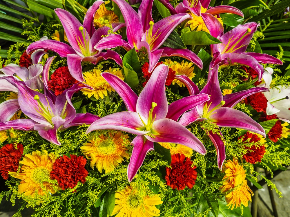 purple and yellow flowers with green leaves