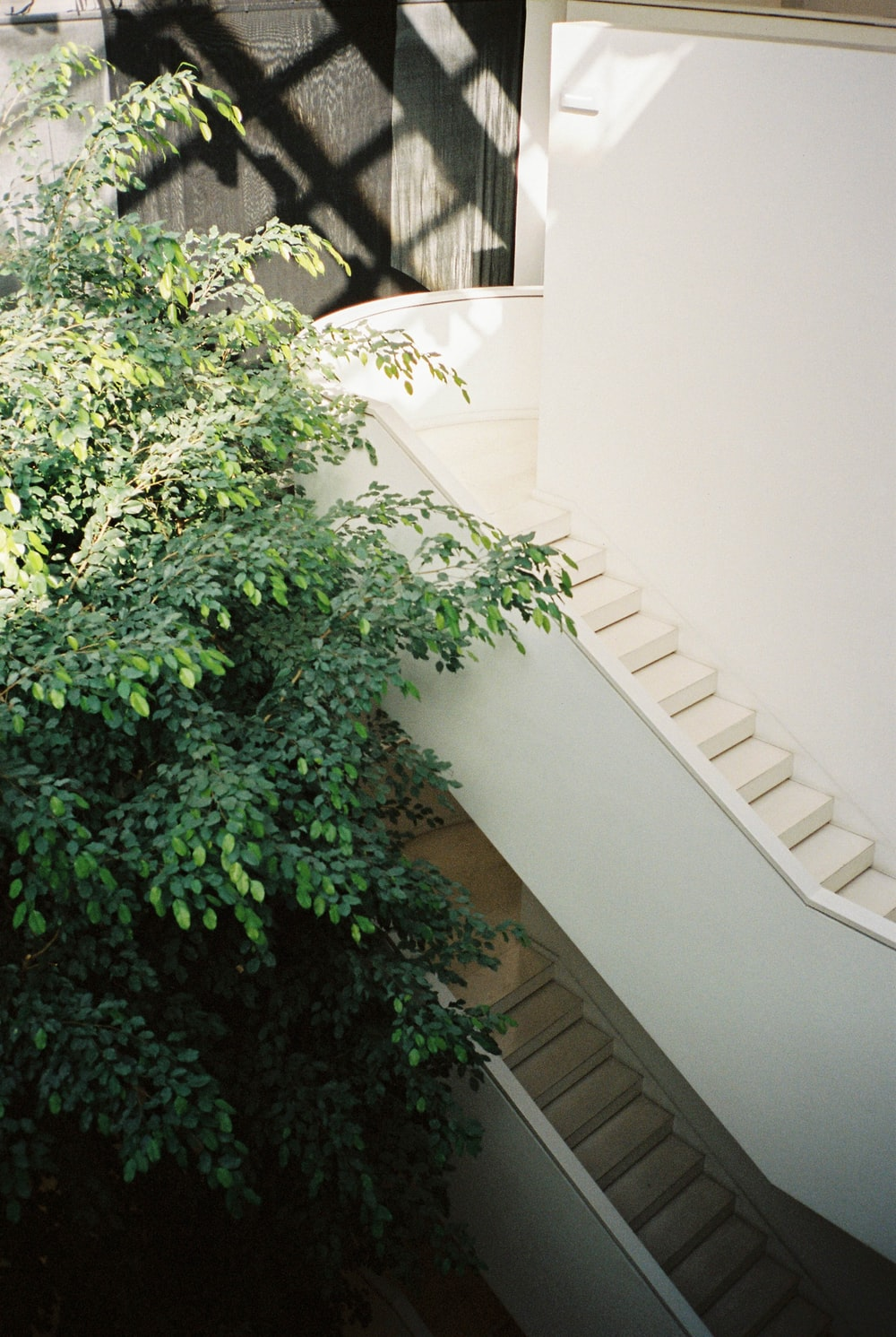 green plant on white concrete wall
