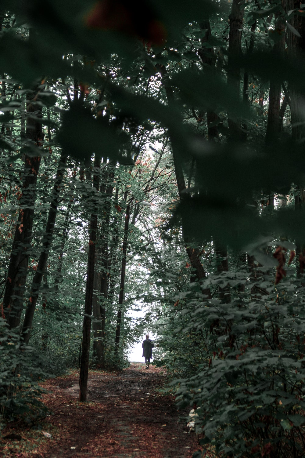 people walking on forest during daytime