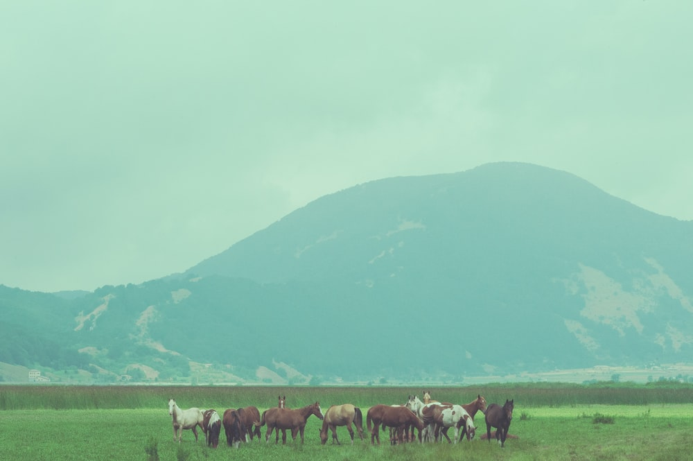 horses on green grass field near green mountain during daytime