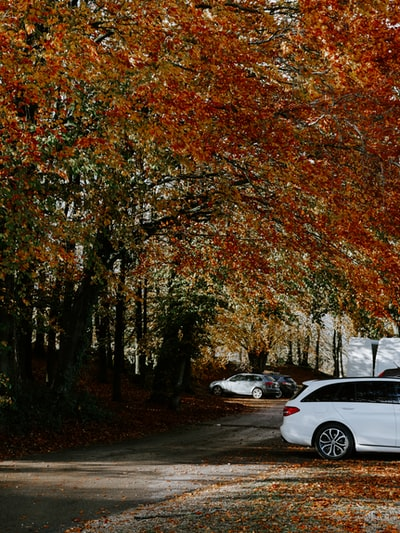 white sedan parked near brown trees during daytime
