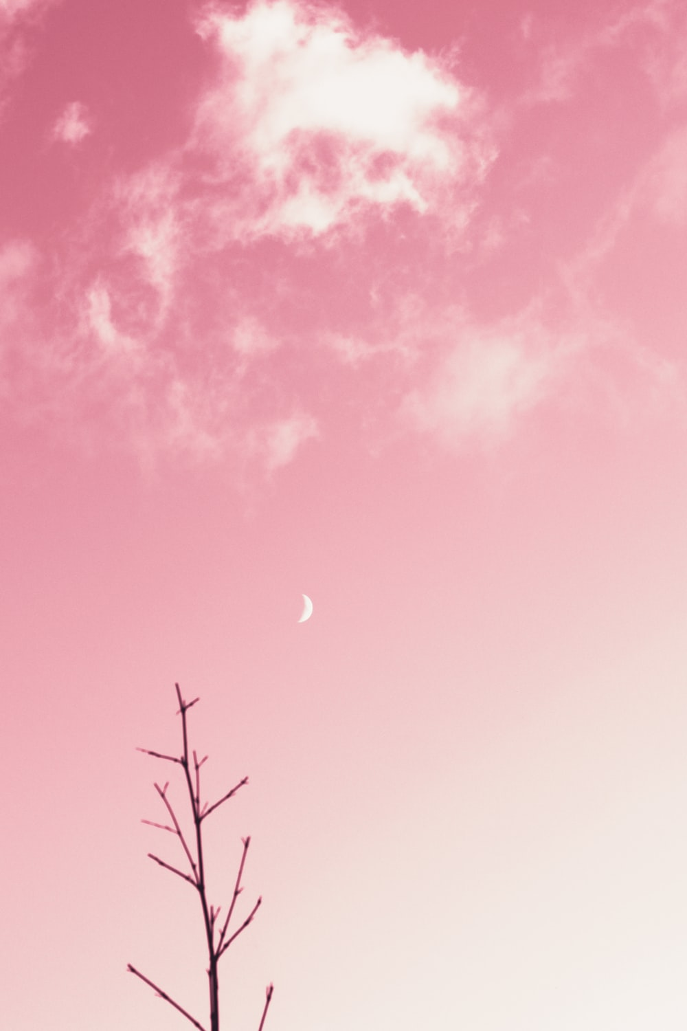 pink and blue sky with moon