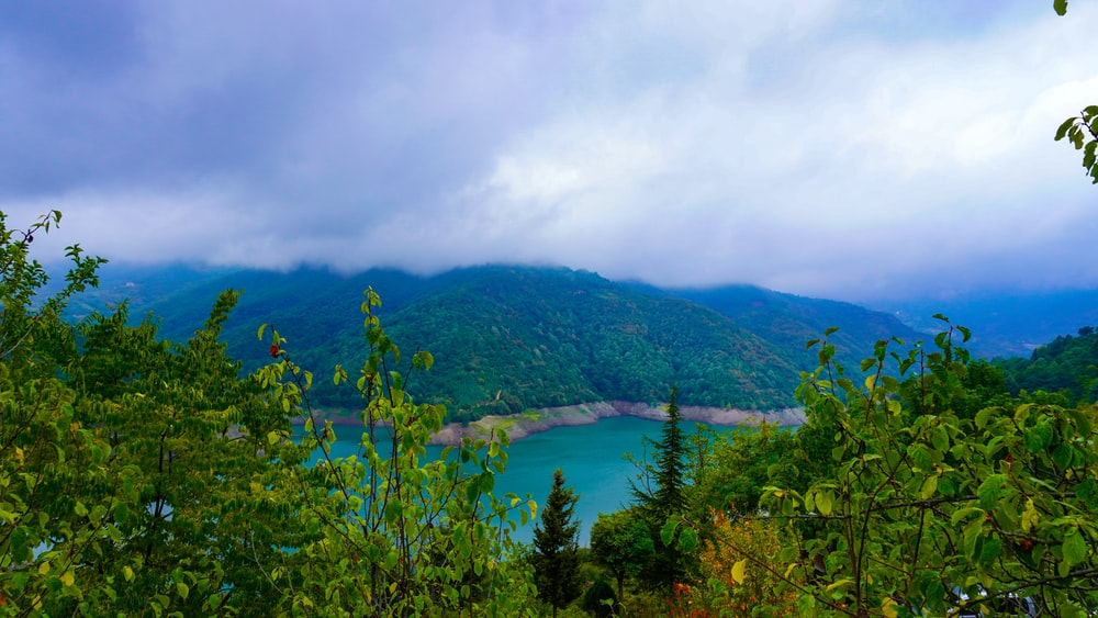 green trees on mountain near body of water during daytime