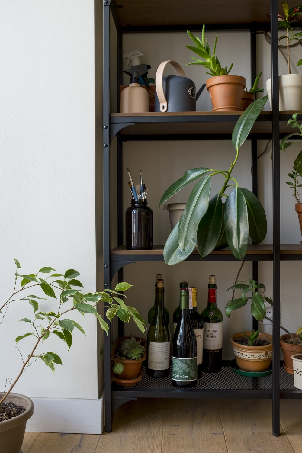 green plant on brown wooden shelf