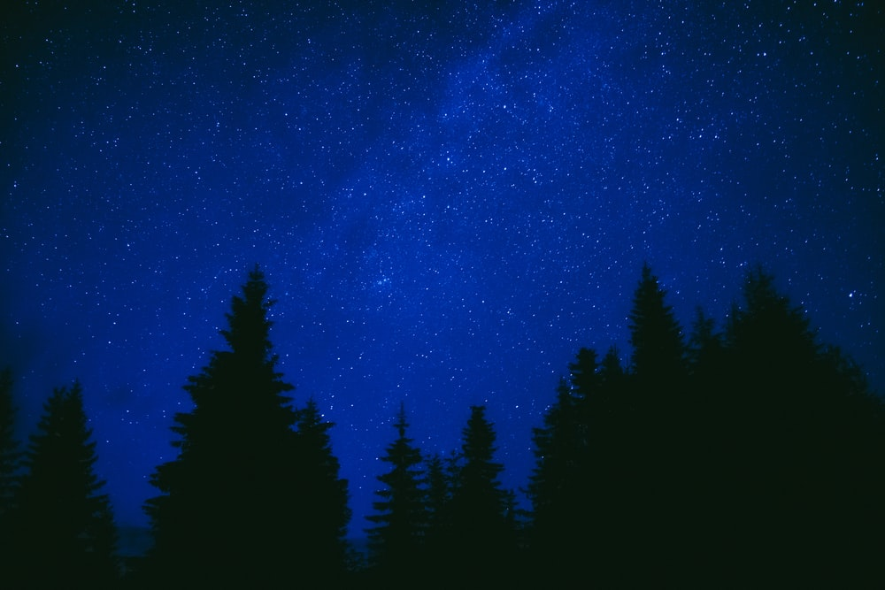 silhouette of trees under blue sky during night time