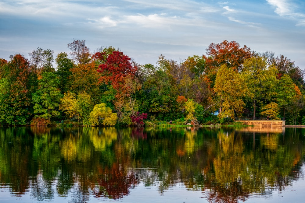 green and red trees beside body of water during daytime