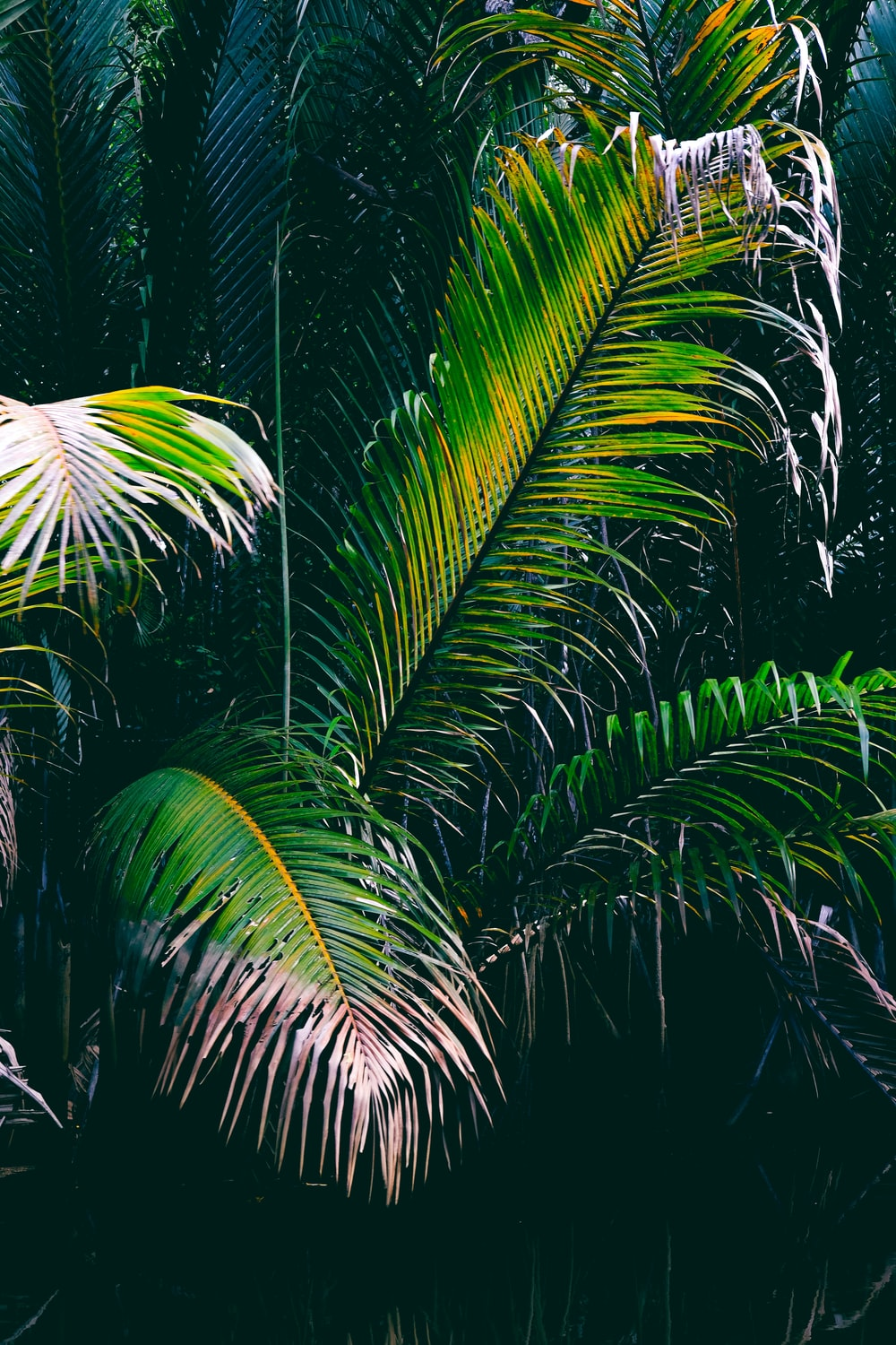 green palm plant during daytime