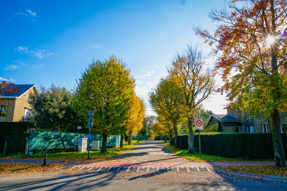 green trees near brown wooden house under blue sky during daytime