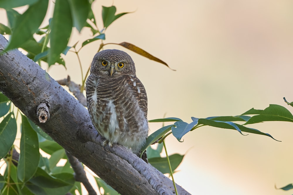 brown and white owl perched on tree branch