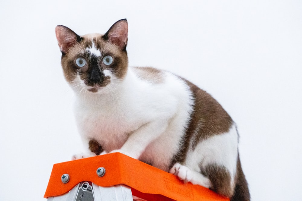 white and brown cat on orange and white textile