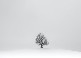 black tree on white snow field
