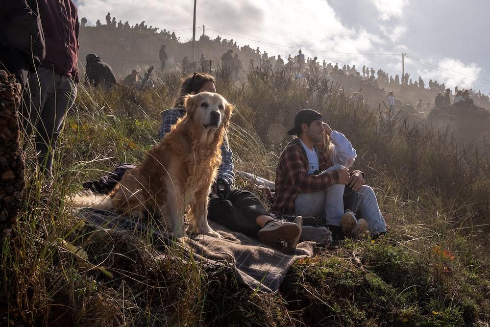 man and woman sitting on grass field beside golden retriever