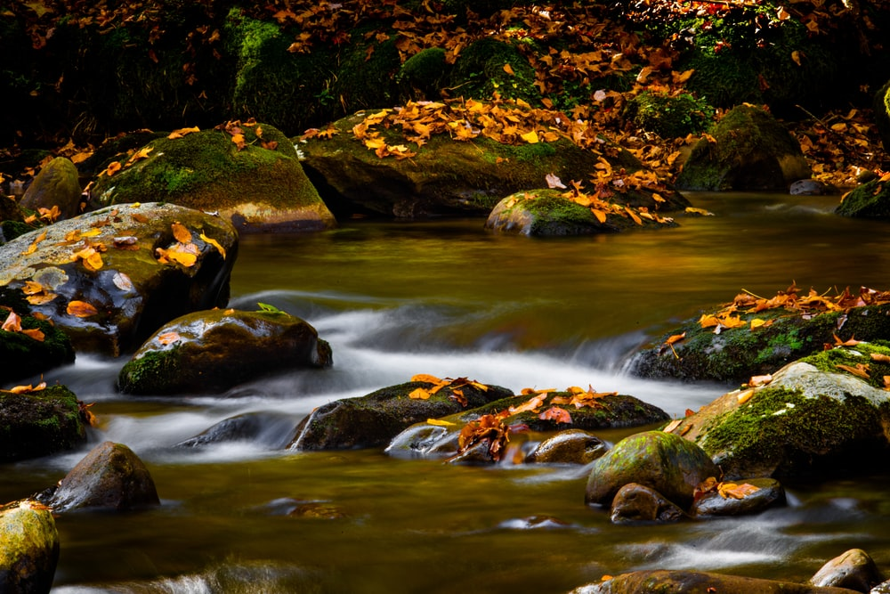 green moss on rocky river