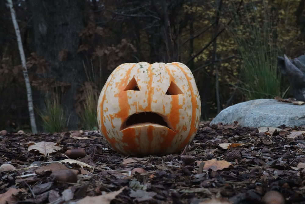 brown jack o lantern on gray rock