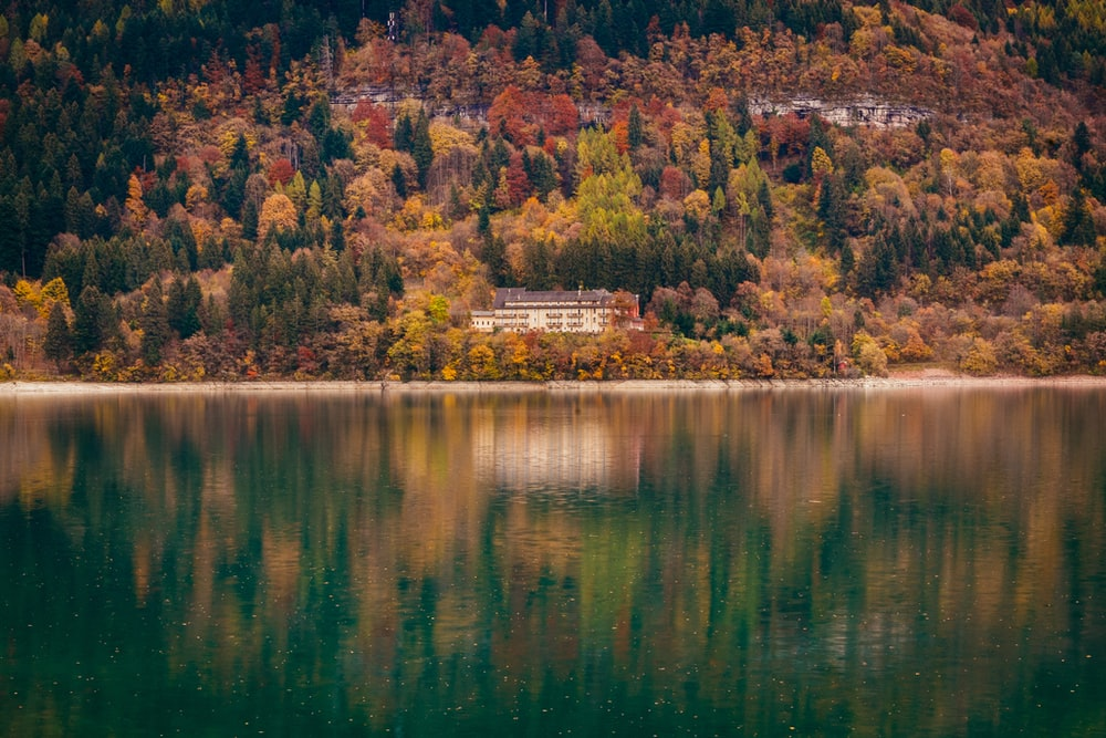 brown and green trees beside body of water during daytime