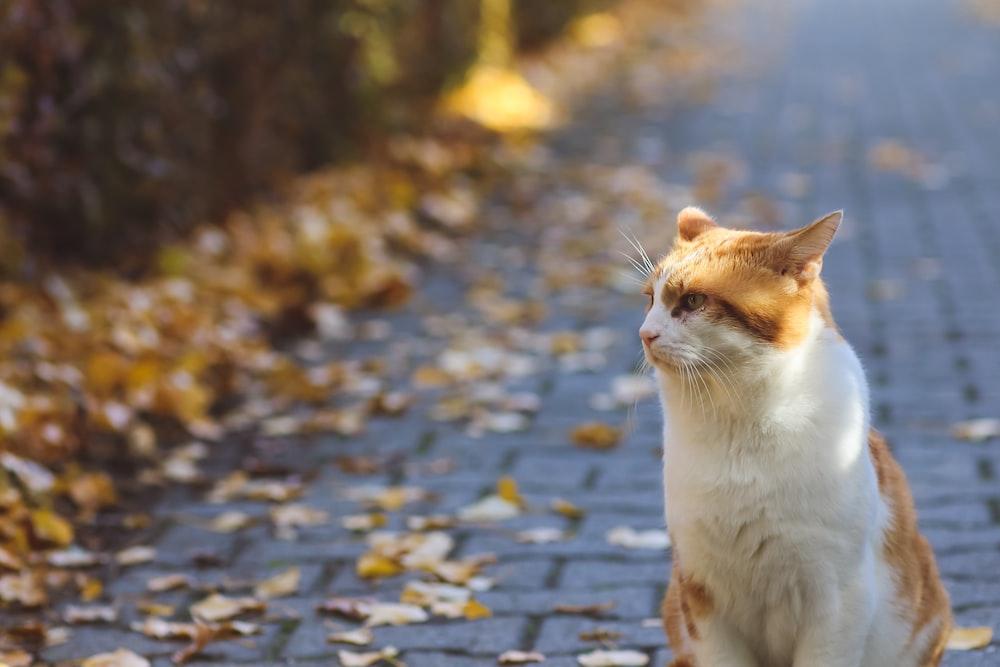 white and orange cat on gray concrete pavement