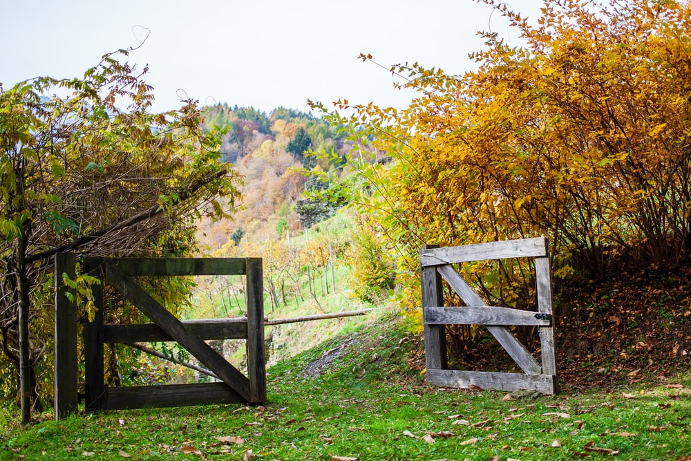 brown wooden fence on green grass field near green trees during daytime