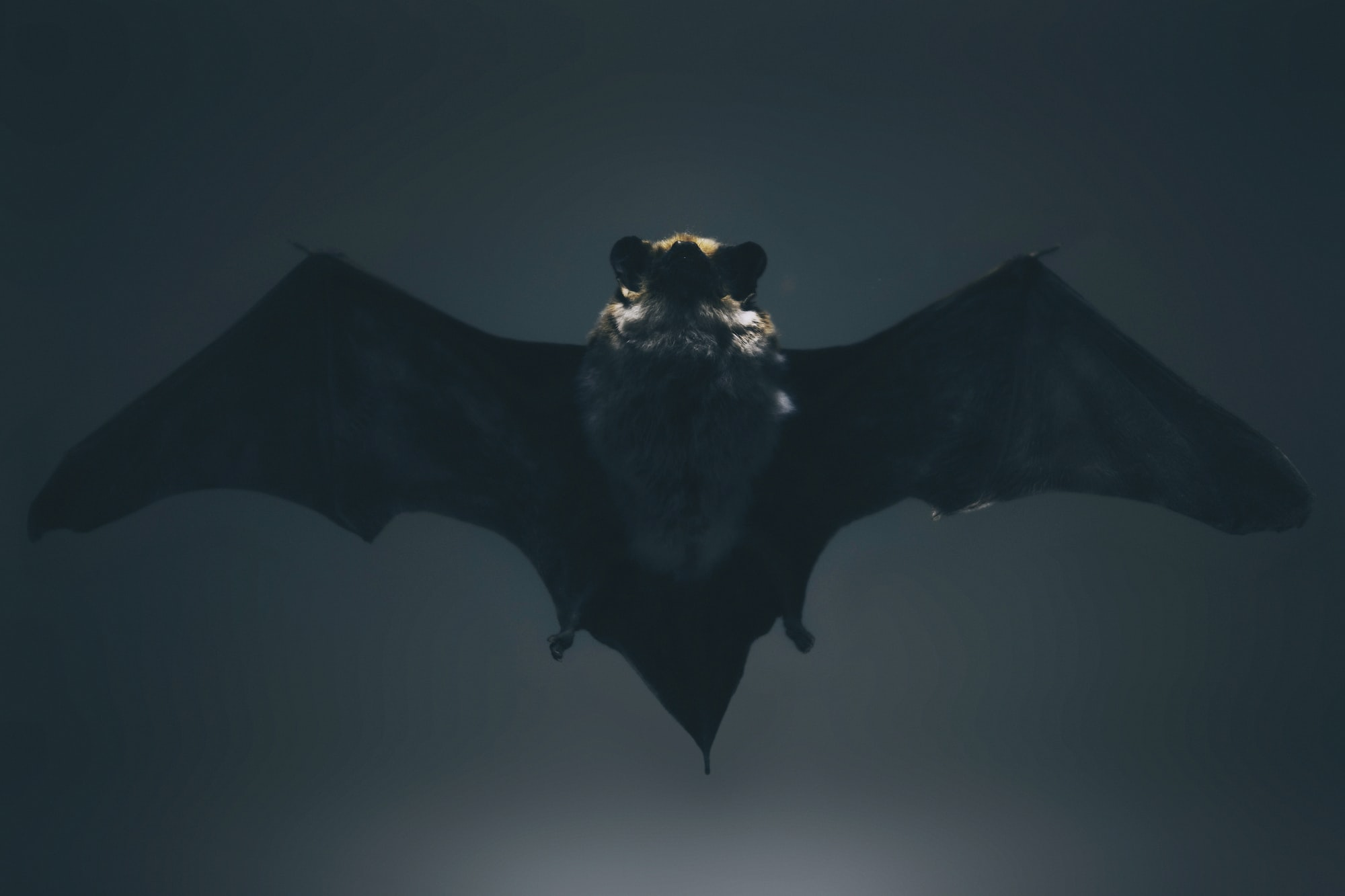 Vampires, werewolves, & the Toyota Production System