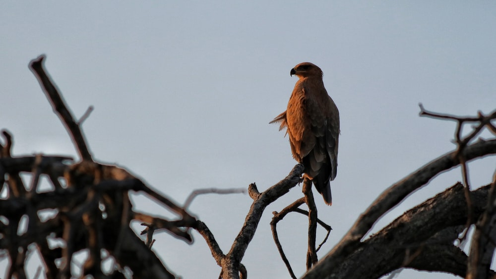 brown bird on tree branch during daytime