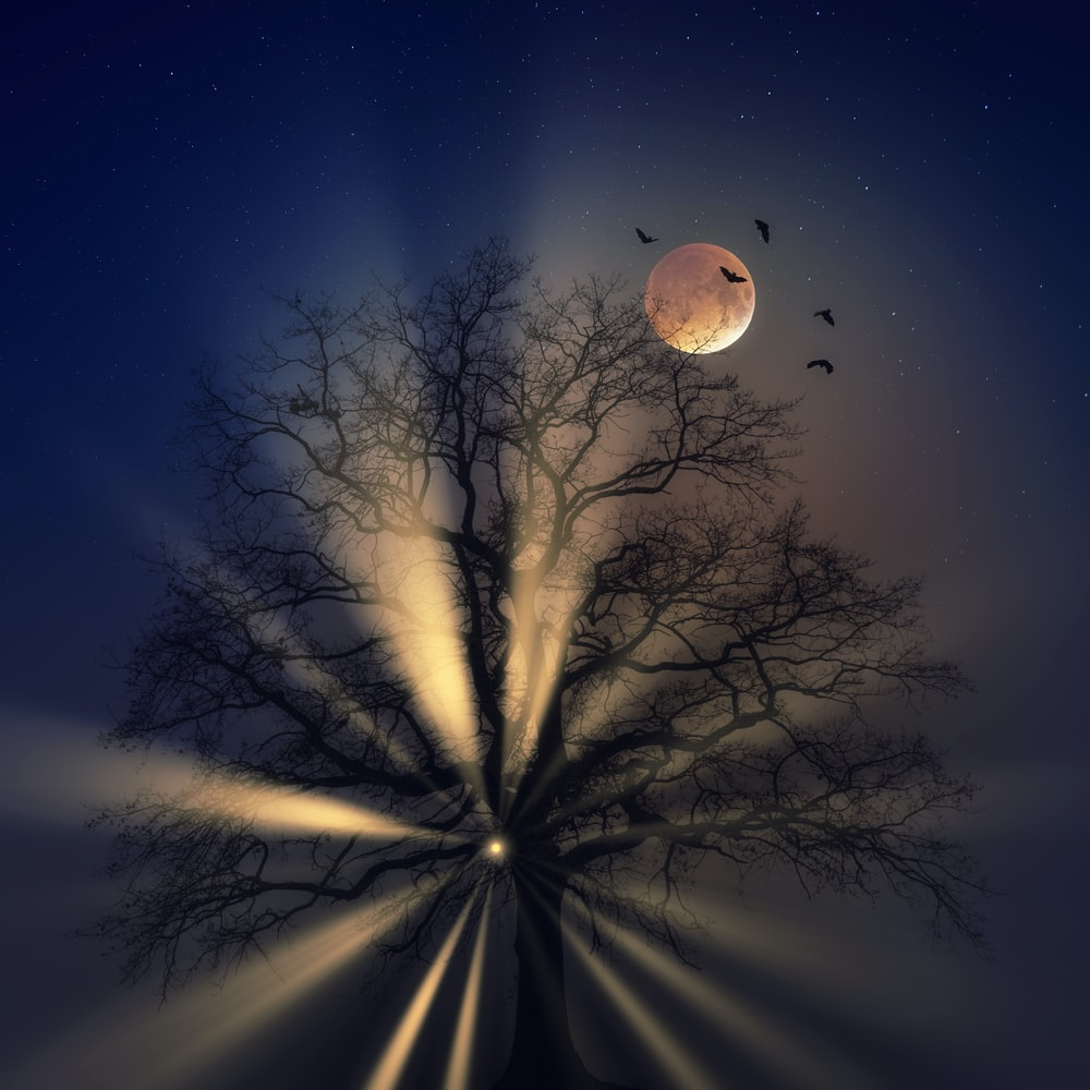 bare tree under full moon