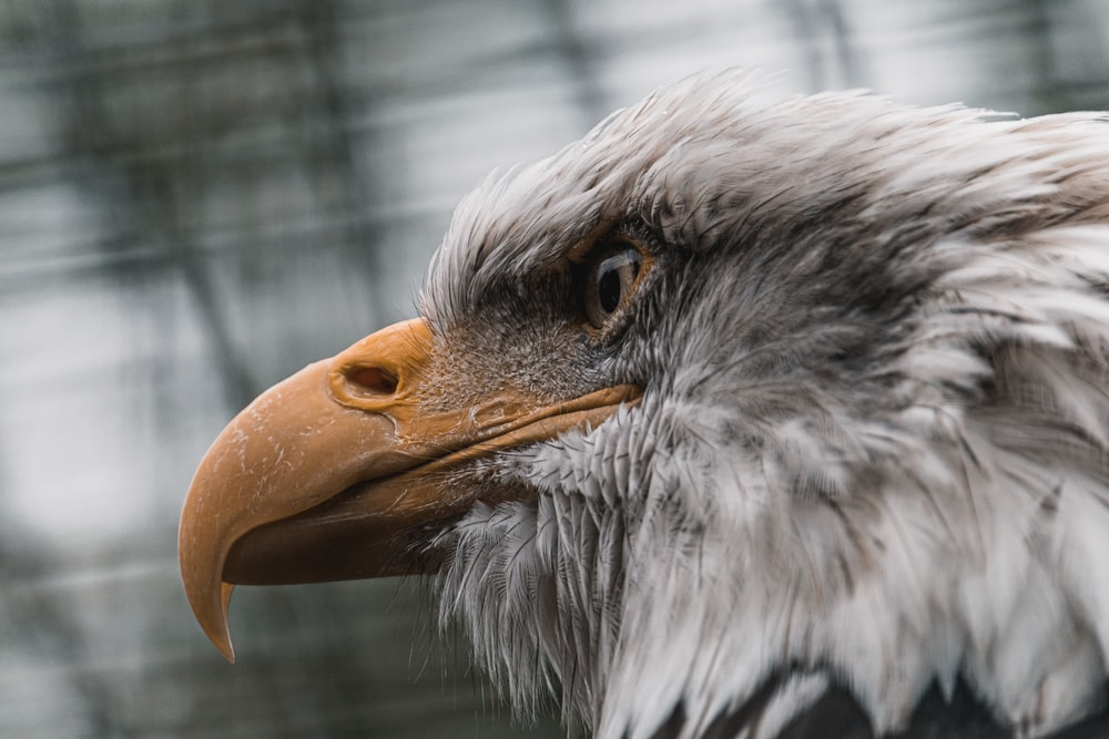 white and brown eagle in cage