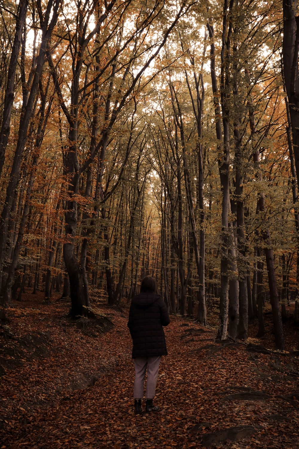 person in black jacket standing in the middle of forest during daytime