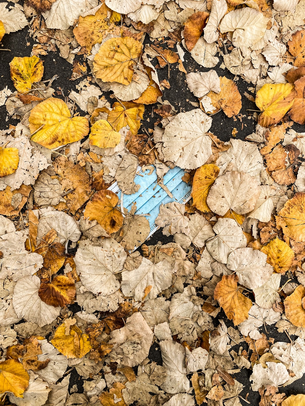 brown leaves on blue plastic crate