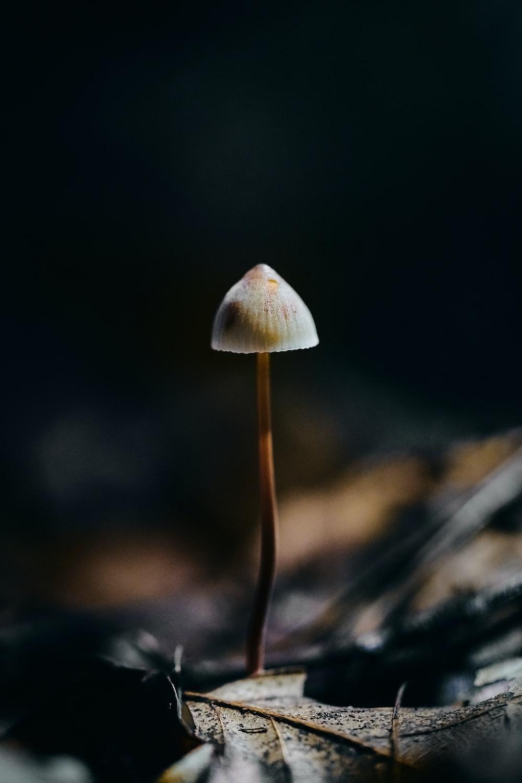 white mushroom in tilt shift lens