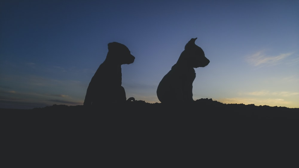 silhouette of two animal statues during sunset