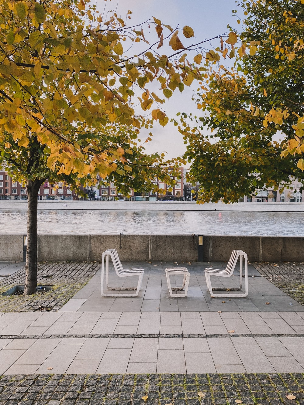 white wooden bench near green trees during daytime