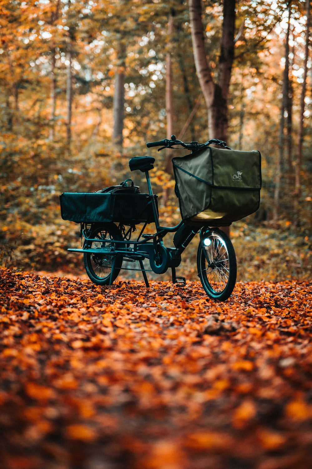 black and blue bicycle on brown dried leaves during daytime