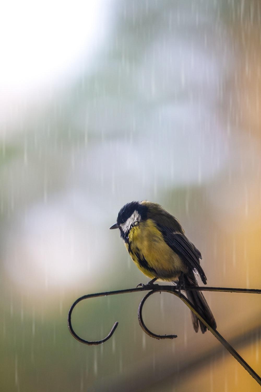 yellow and black bird on black metal bar