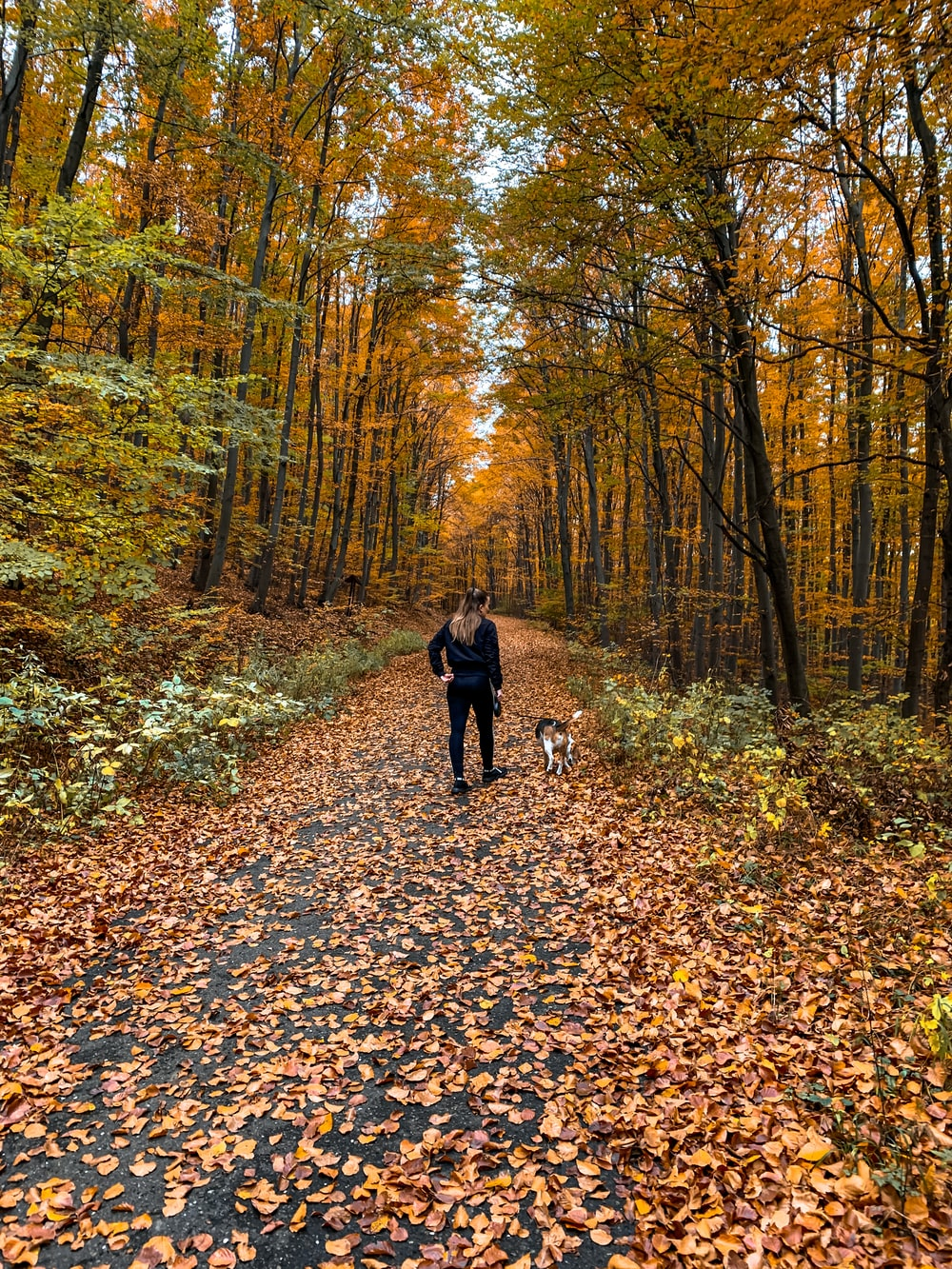 person in black jacket and black pants walking on brown dried leaves on ground