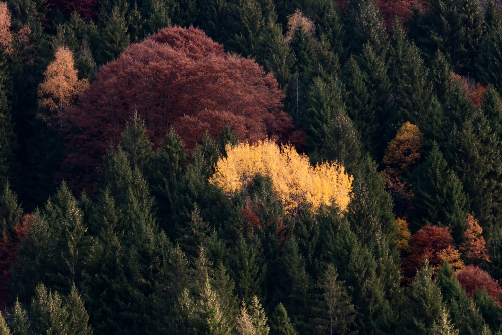 yellow and red trees during daytime