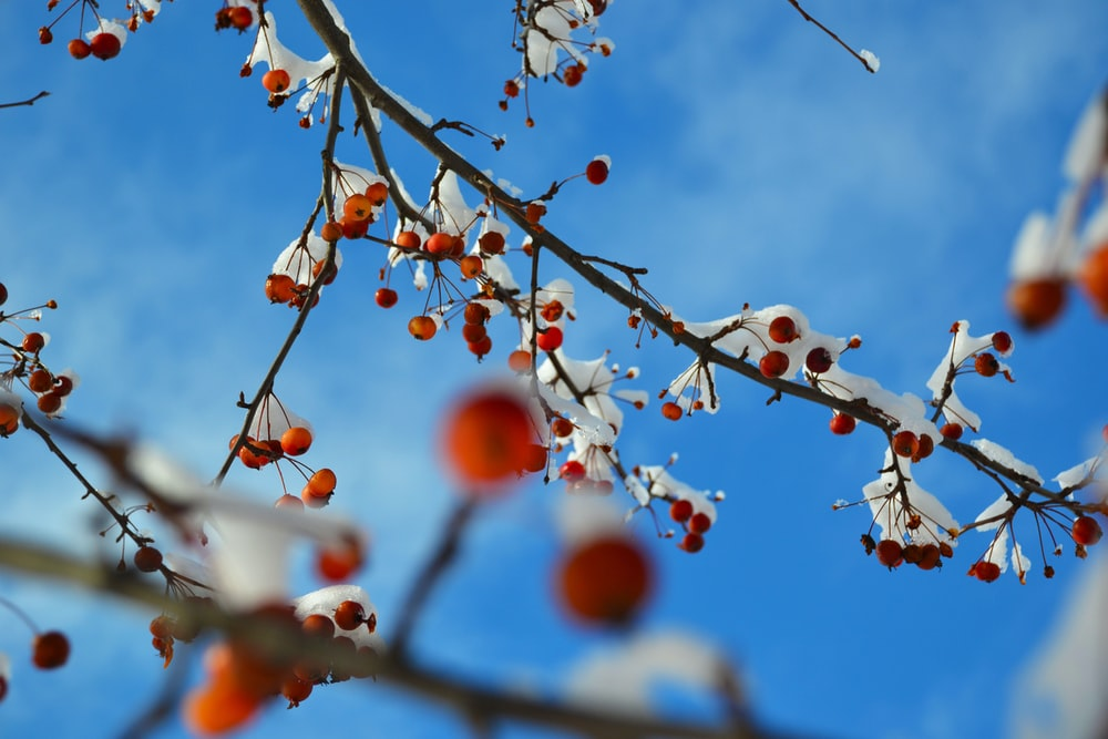 red and orange round fruits on tree branch under blue sky during daytime