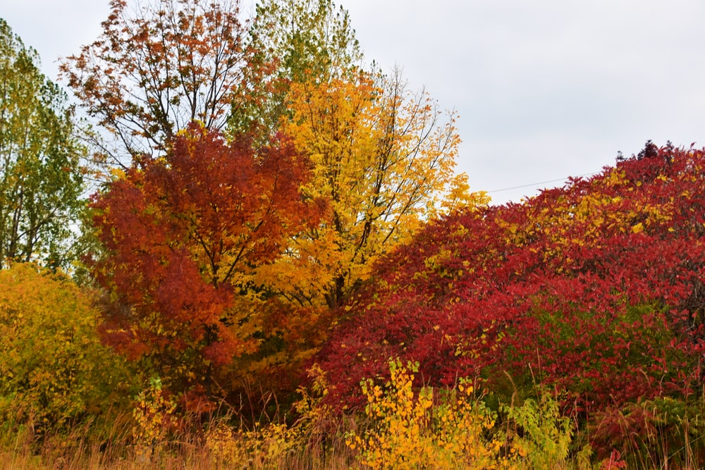 red and yellow leaf trees under white clouds during daytime