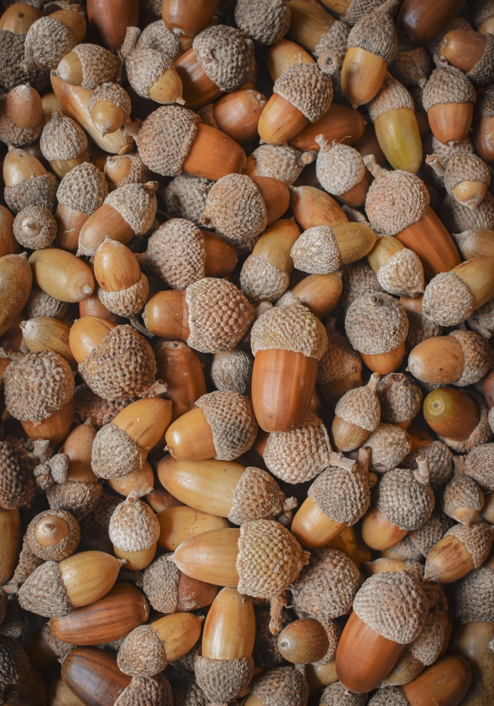 brown and beige nut lot