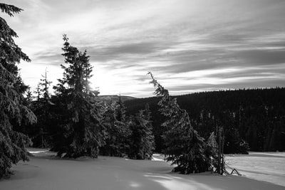 grayscale photo of pine trees czechia zoom background