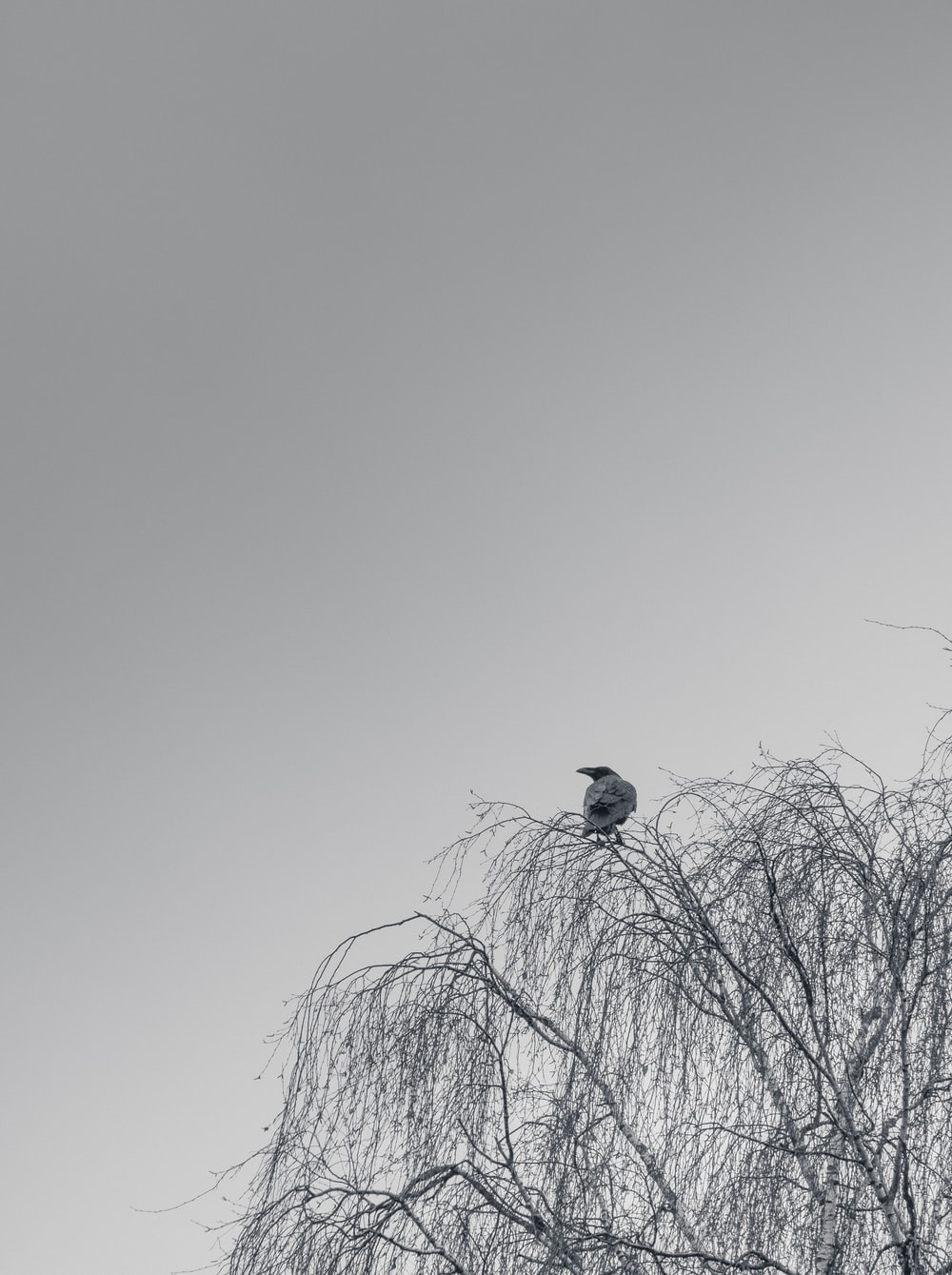 white and black bird on bare tree during daytime