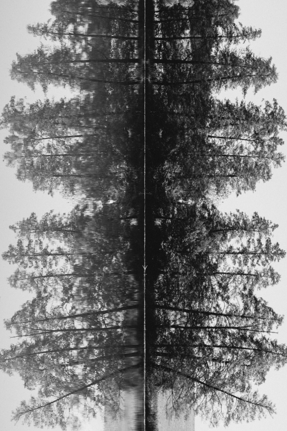 grayscale photo of trees during daytime