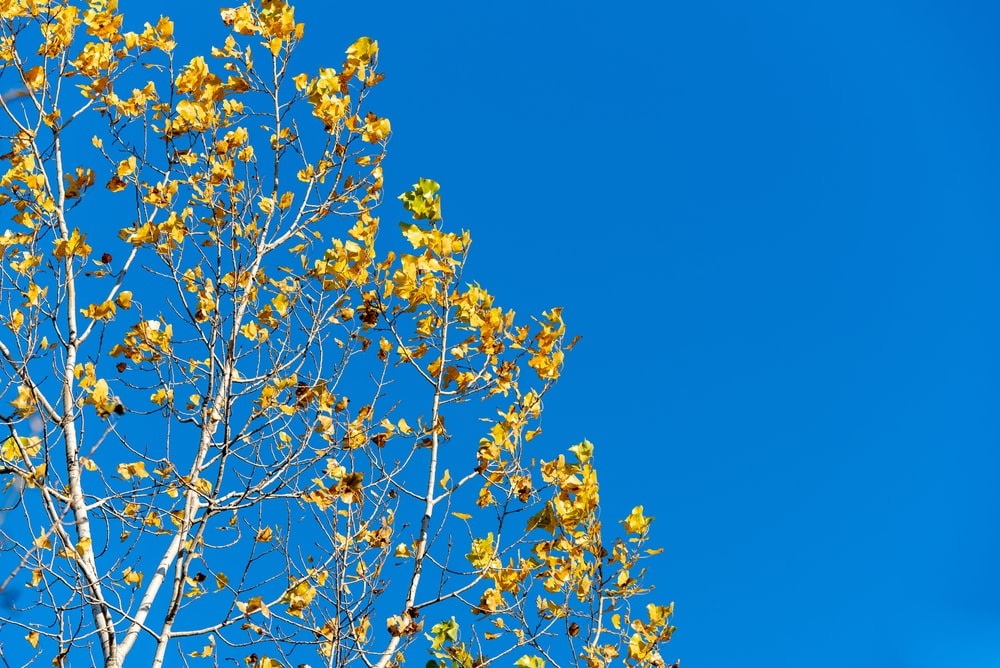 yellow flower under blue sky during daytime